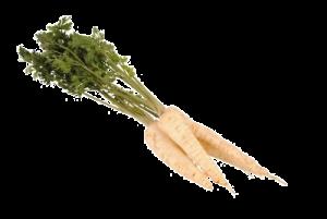 wortelpeterselie